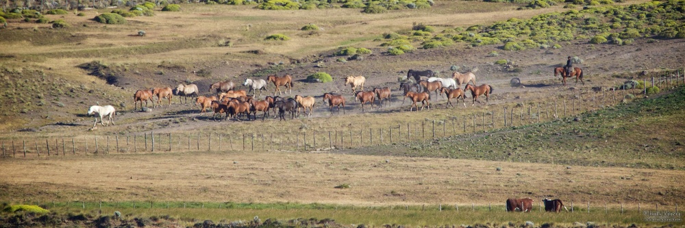 Returning to Pasture