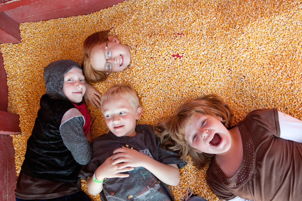 The Fall Festival at West End Creamery includes many family activities such as the corn crib, two corn mazes, pumpkin patch (pick your own pumpkins), and the Barnyard Jump at our farm.