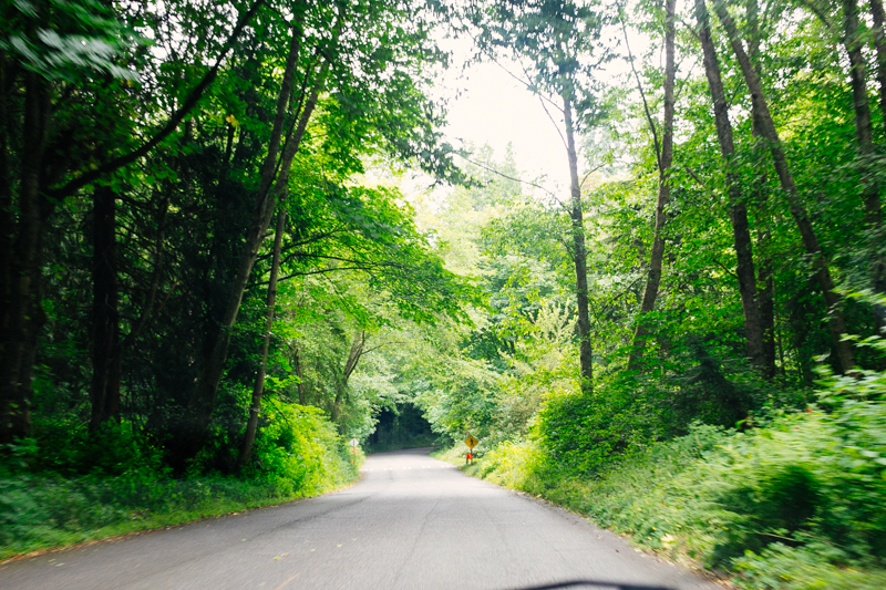 The road into Discovery Park