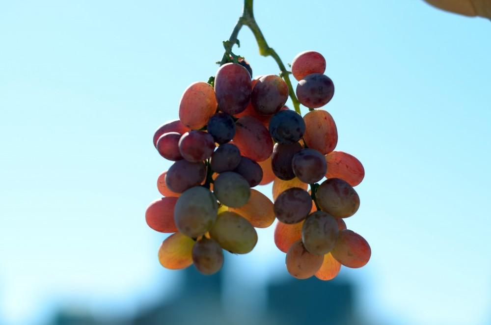 grapes-1024x678.jpg