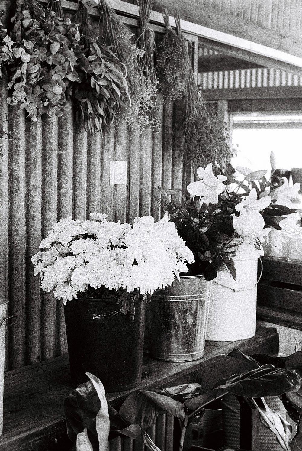 Dried Flowers - Byron Bay