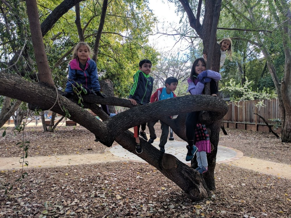 The kids had a great time tree climbing and exploring!