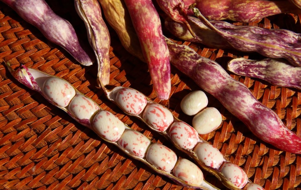 This is what the beans look like: photo borrowed from  Seed to Table blog