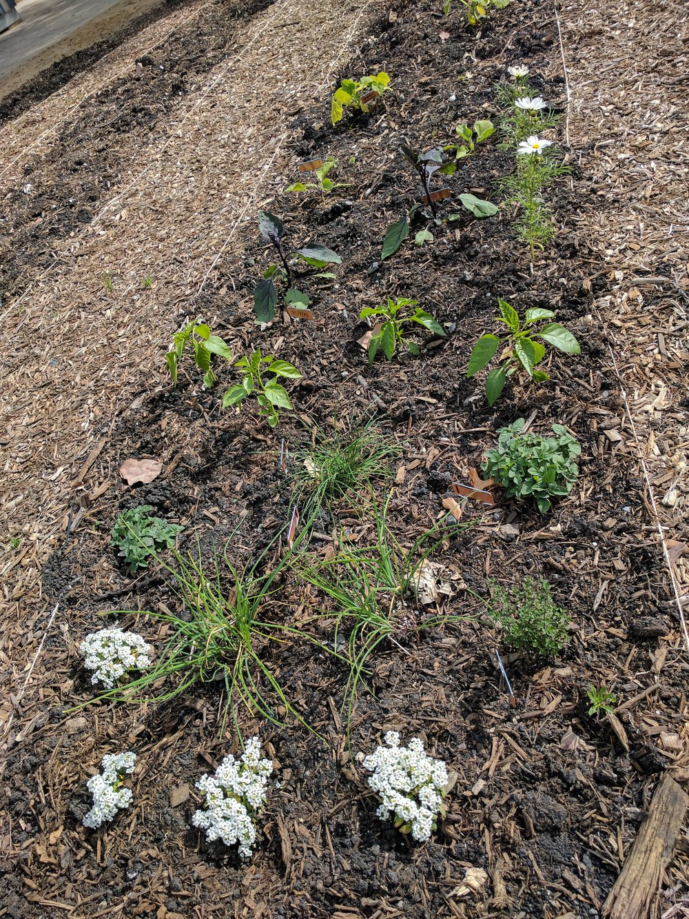small-scale garden planting of mixed edibles