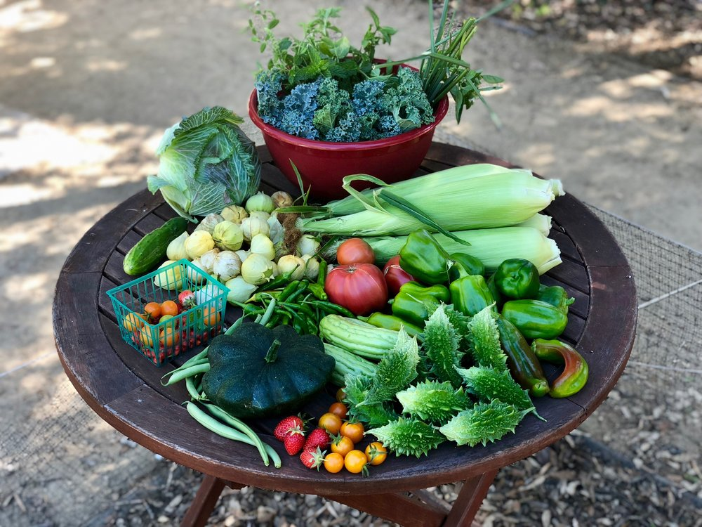 This week we harvested (clockwise from top): cabbage, kale, scallions, corn, bell peppers, tomatoes, bitter mellon (indian and chinese), sungold tomatoes, strawberries, squash, green beans, tomatillos, and cucumbers. Photo:  Jason O'Grady .