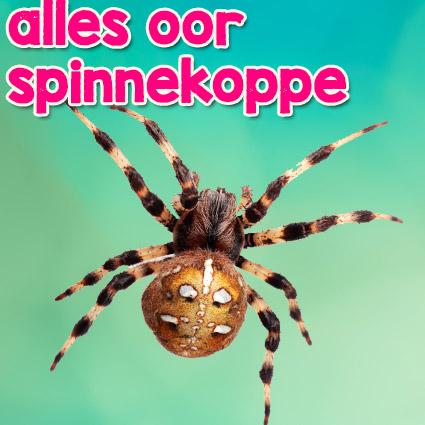 spinnekop.jpg