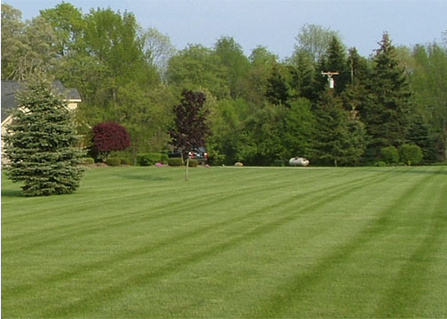 French Lawn-Lines copy.jpg