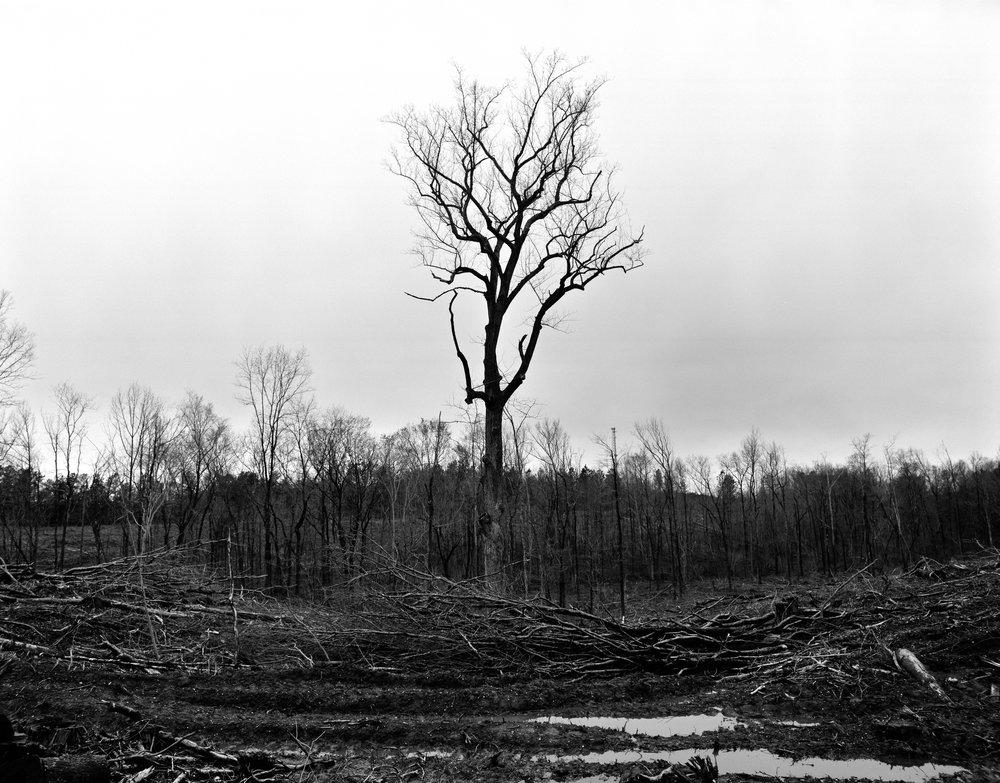 Lonetree.jpg