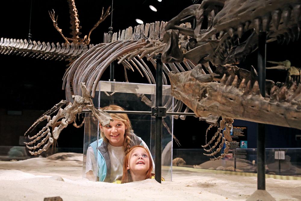 GSU Museum Mosasaur.jpg