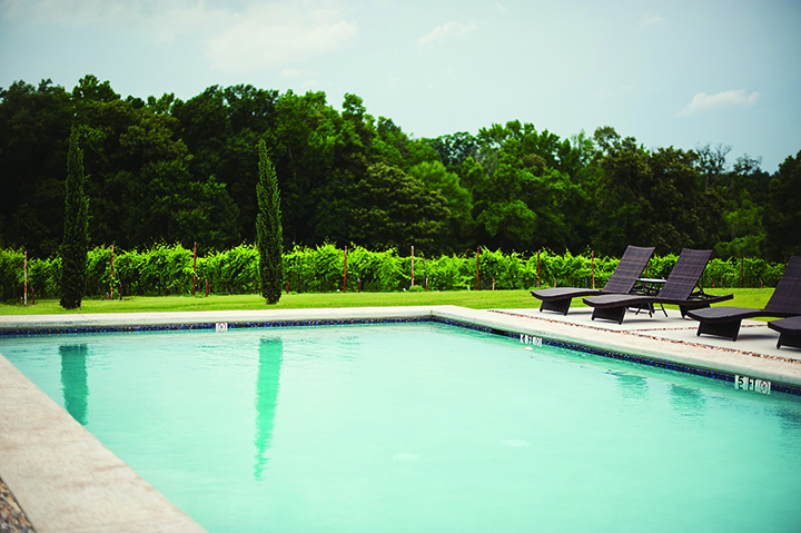 Pool and vineyard_sm.jpg