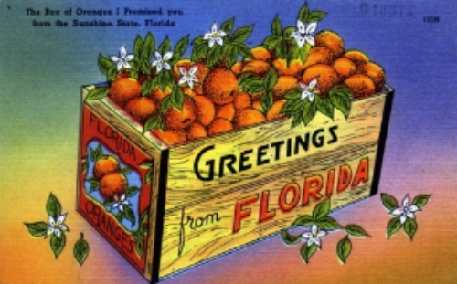 Greetings from Florida. State Archives of Florida,   Florida Memory  , http://floridamemory.com/items/show/158104