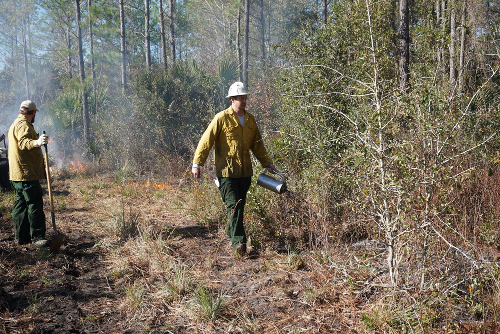 Fire crew sets fire during a prescribed burn at the Williams'. Photo by DCW.