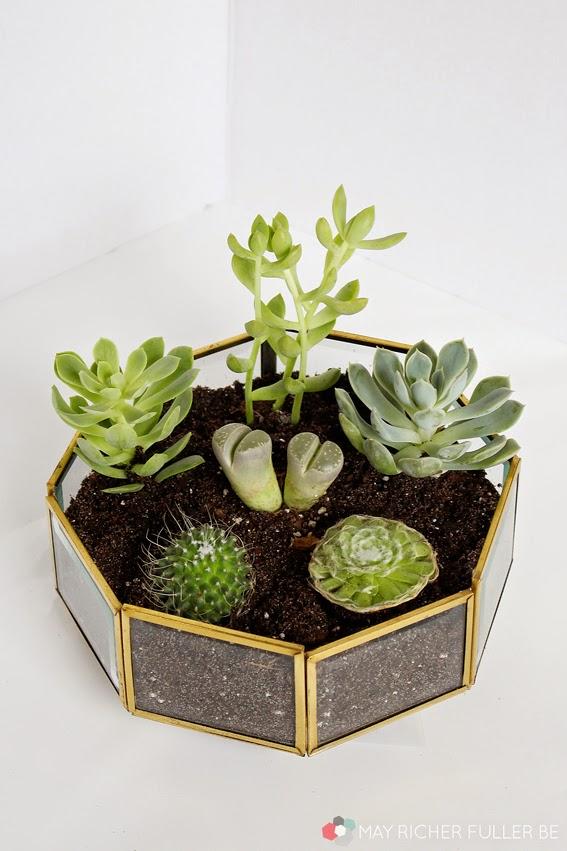 Succulent-Terrarium-Brass-Light-Fixture-18.jpg