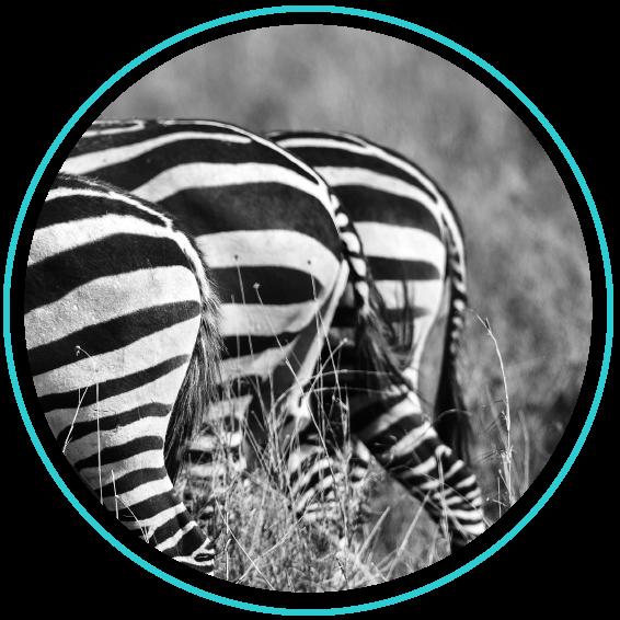 CirclePhoto_Zebra.png