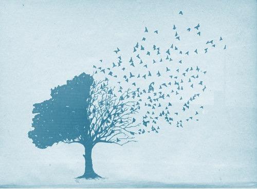 rootsandwings.jpg