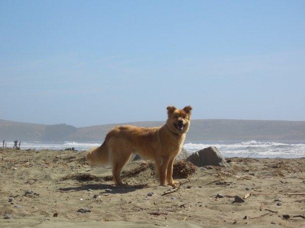 Koa - Shop Dog #1