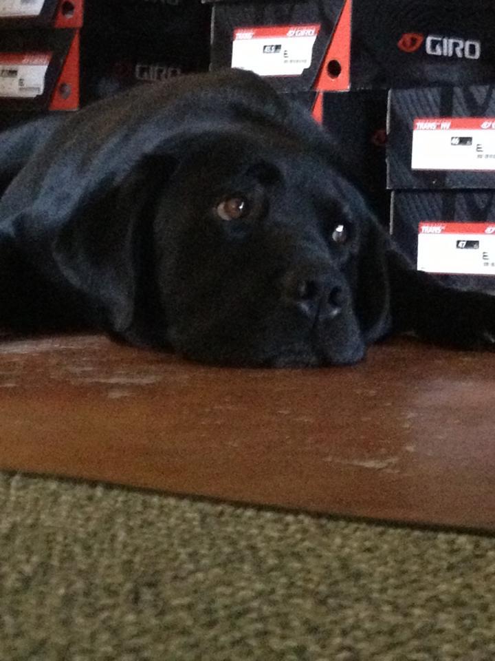 Luca - Shop Dog #2