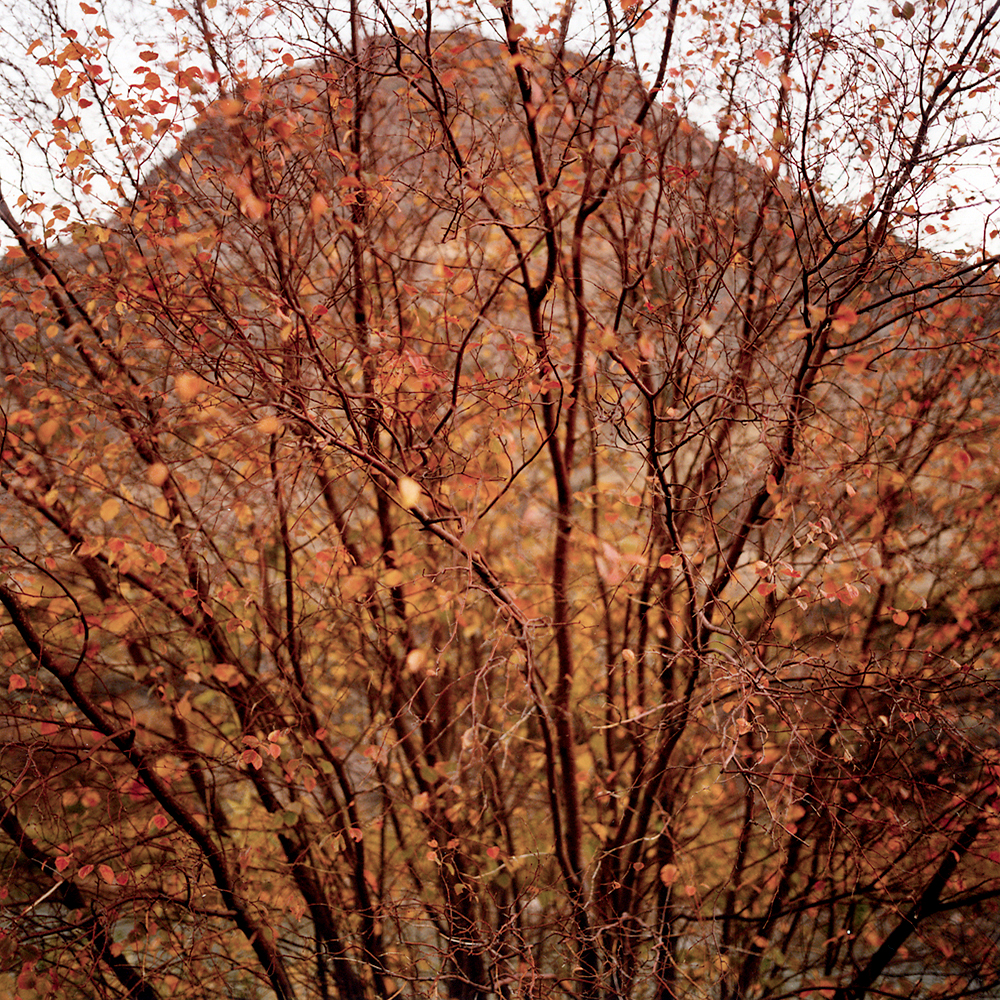 Autumn , Fremont, UT, 1996