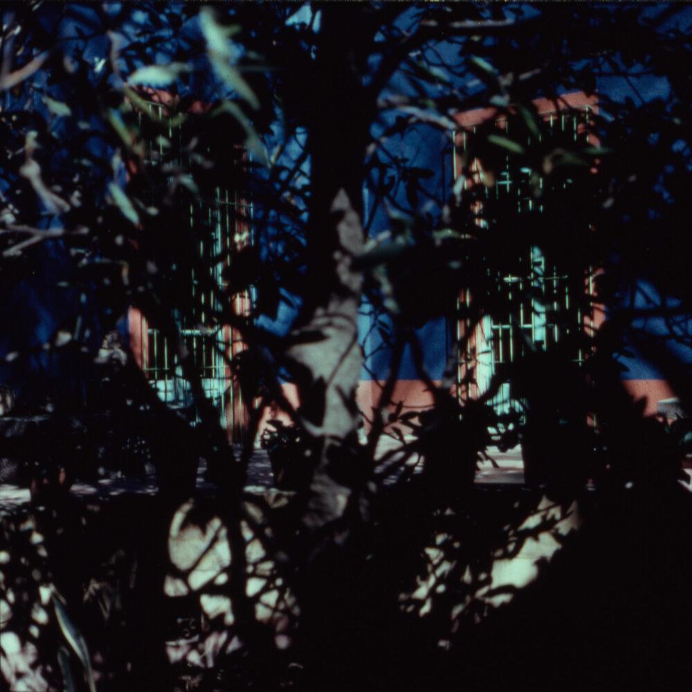 Frida's Tree - (Frida) 1987