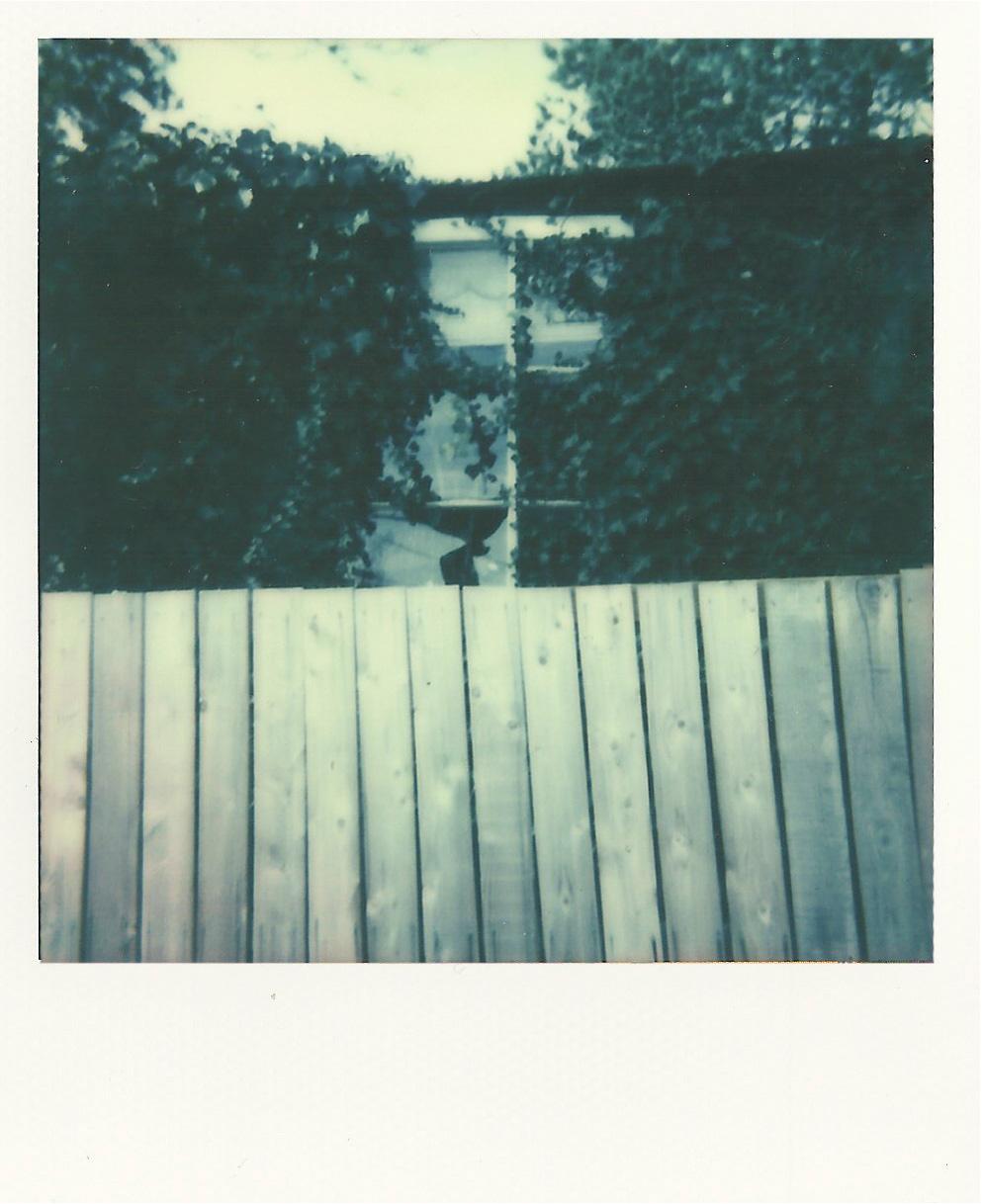 fenceonwhite.jpg