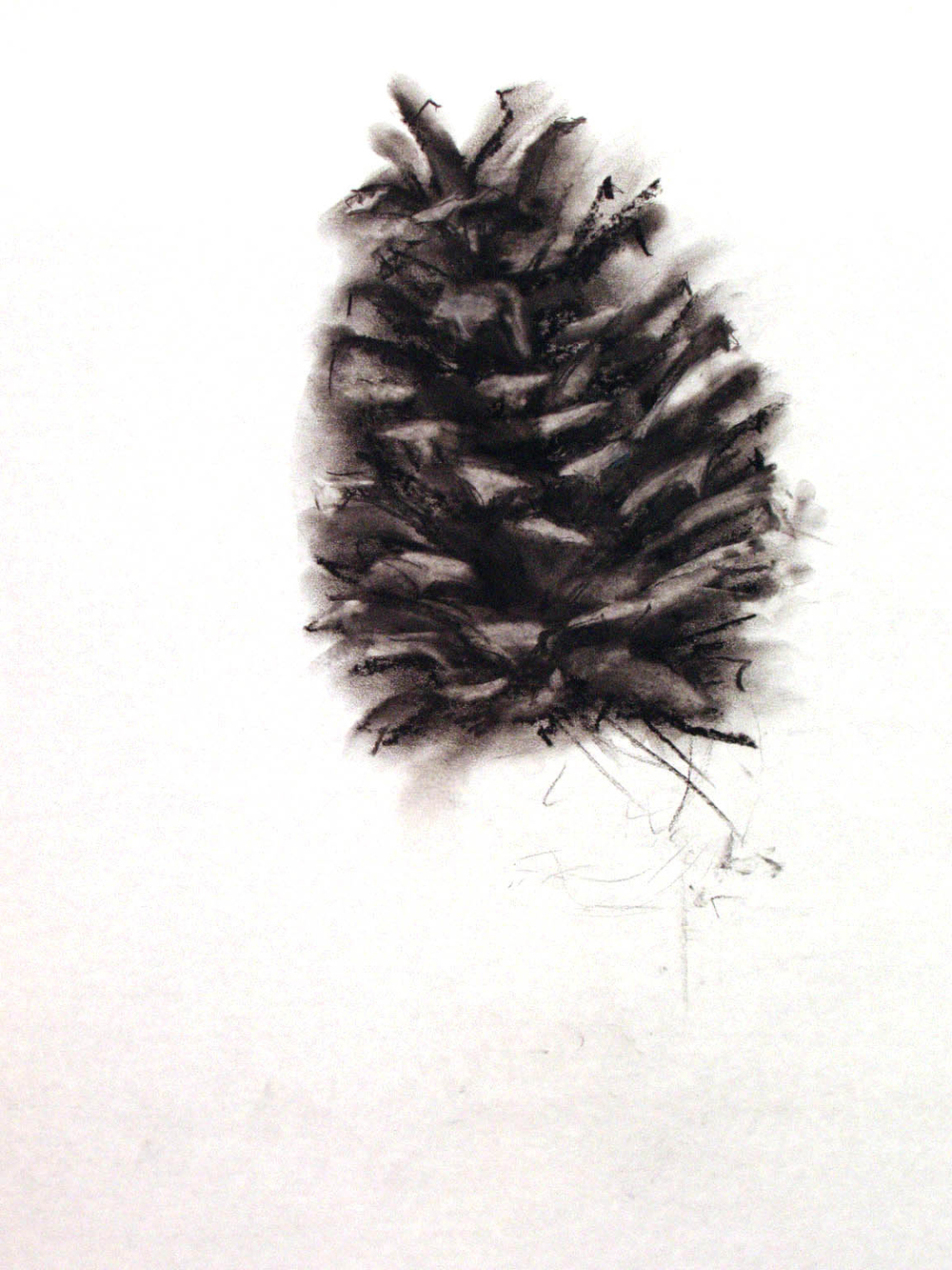 "PINE CONE     14"" x 20"" — Charcoal on drawing paper, 20"" x 24"" framed    $1200.00"