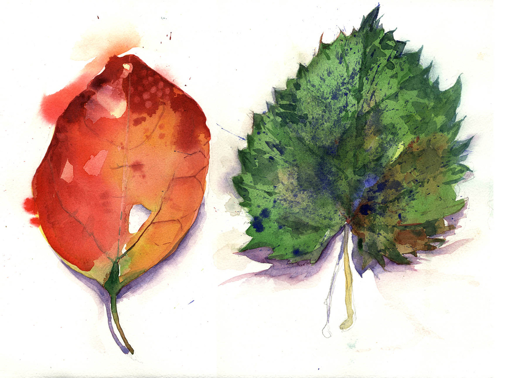 "RED LEAF, GREEN LEAF     (SOLD) 22"" x 15""—Watercolor on w/c paper $400.00"
