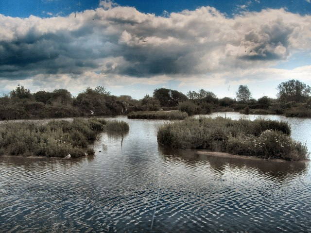 Wetland habitat in Sussex, UK
