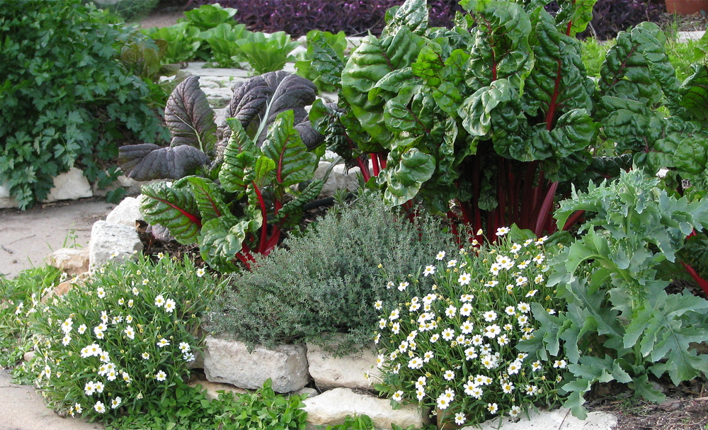 Edible Garden Ideas great front yard idea for free form beds Chard Steals The Show In This Edible Garden