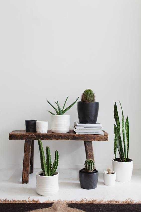 blackandwhiteplants
