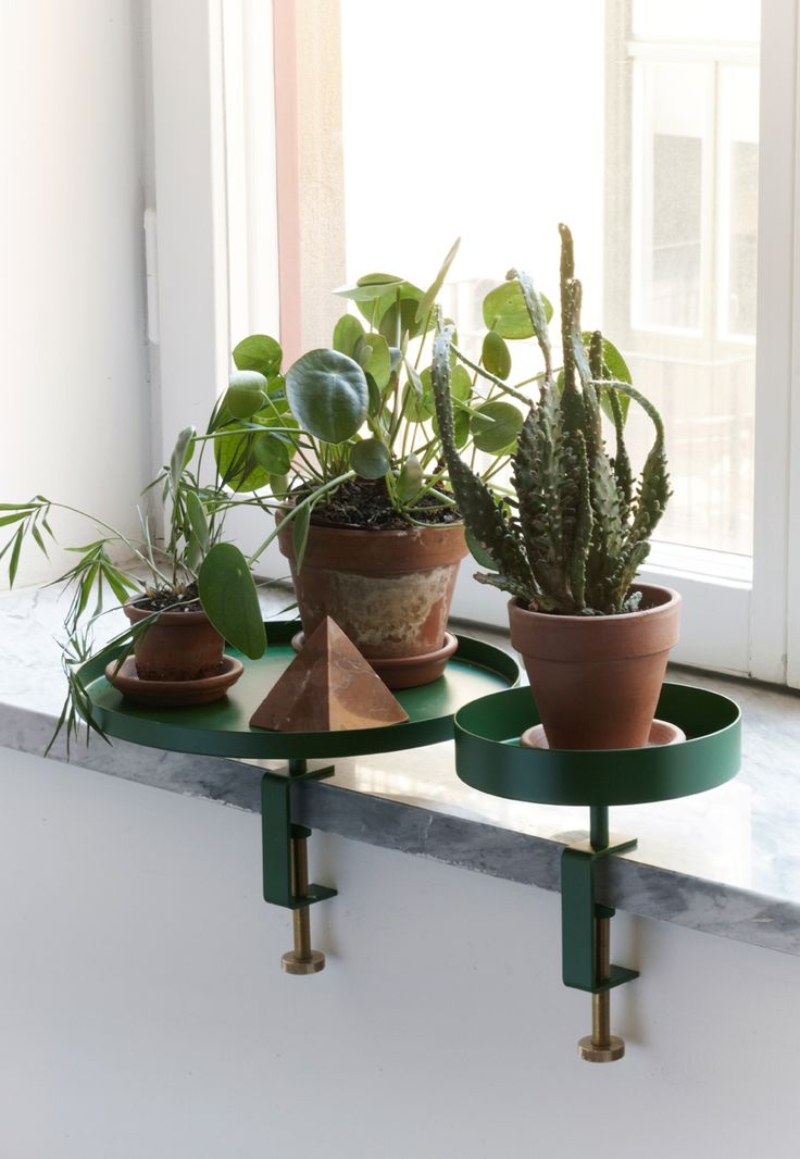 plantsonplatters
