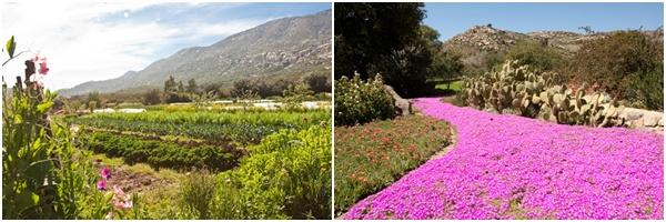 Rancho La Puerta Organic Garden