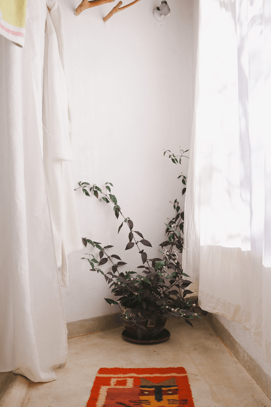A Plant and Curtains
