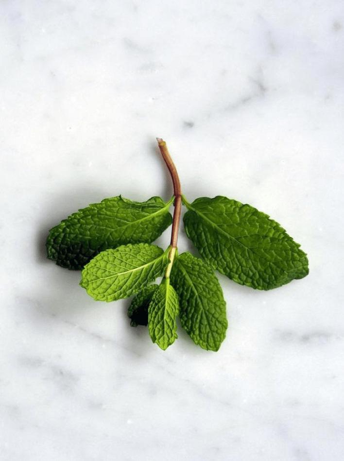 Saffron & Sage Benefits of Peppermint