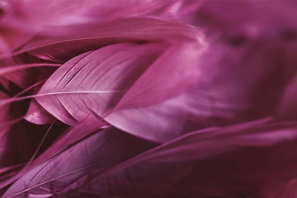 pink_texture_dyrogue_1.jpg