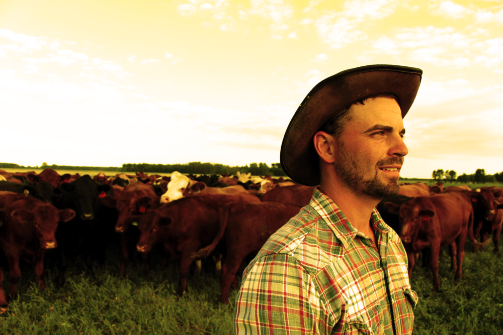 nic & cows filter.png