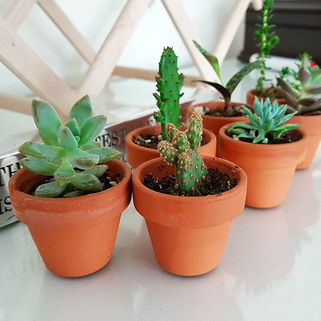 The latest (and most adorable) additions to our team! 🌵😍 #officevibes #cactus #succulent