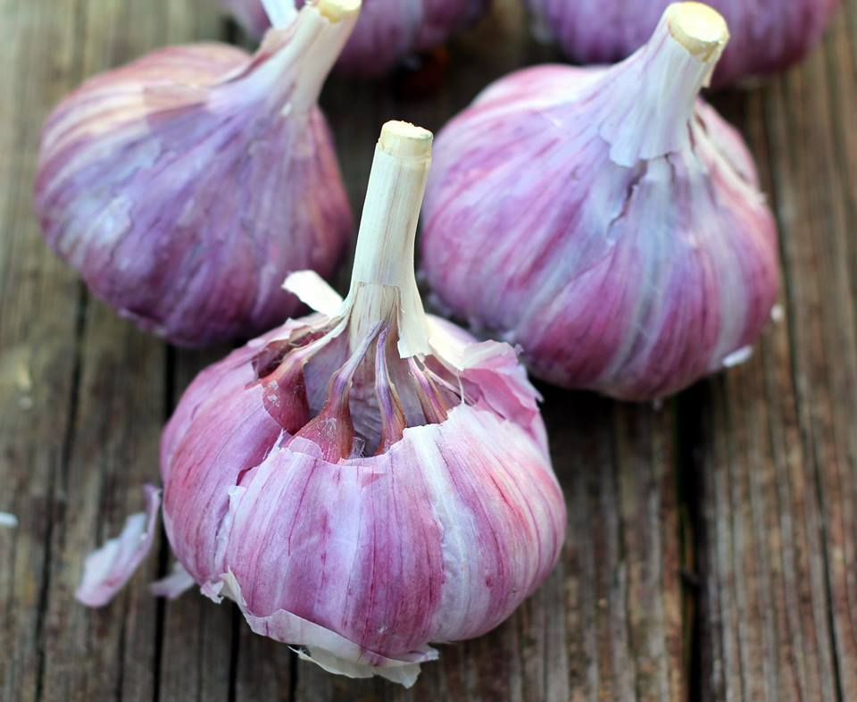 Tibetan heirloom garlic