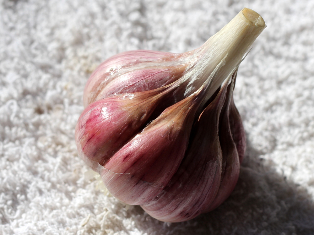 Red Grain heirloom garlic