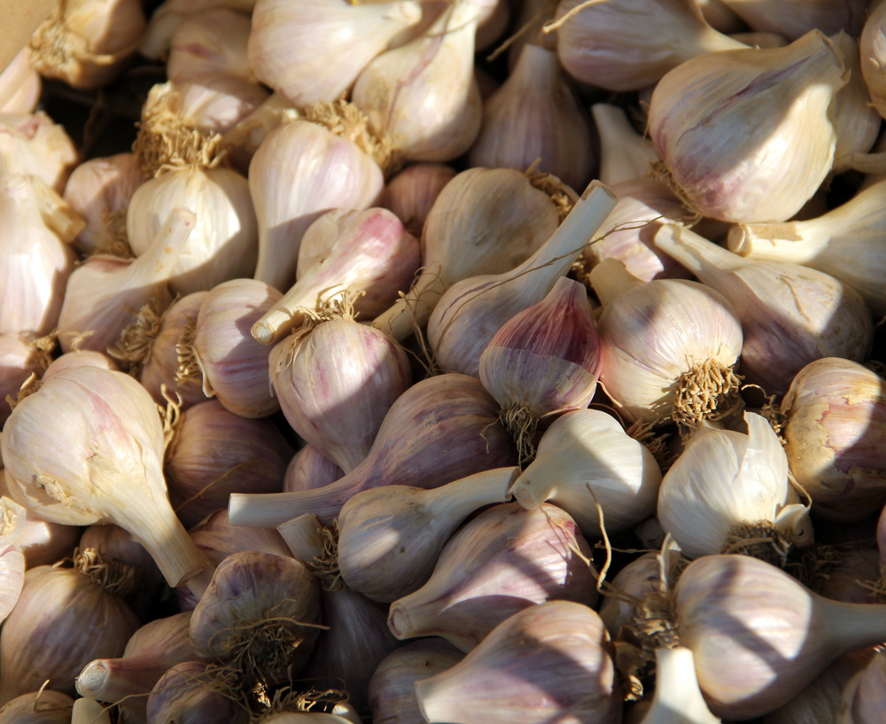 Rosewood heirloom garlic, small bulbs that pack a punch with hot flavor