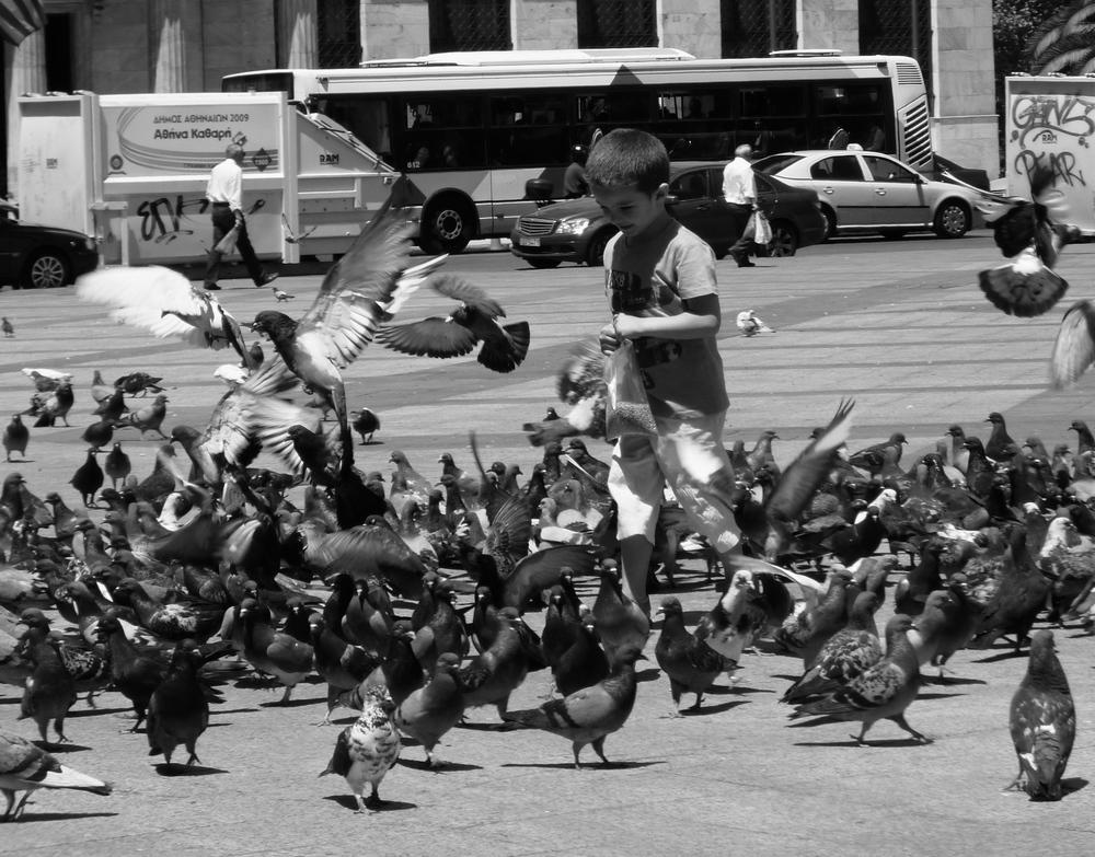 feeding the birds, May 2012