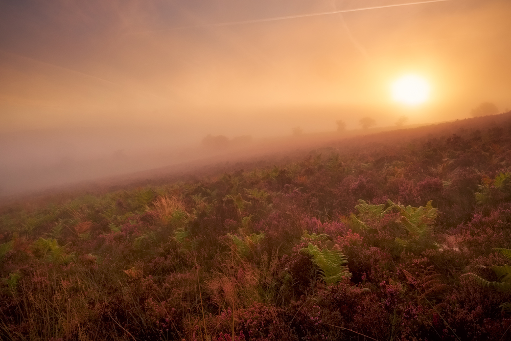 Diffused mist on the hills of Exmoor at sunrise. Fujifilm X-T1 + 10-24mm @ 15.9mm. f/22. 1/40.