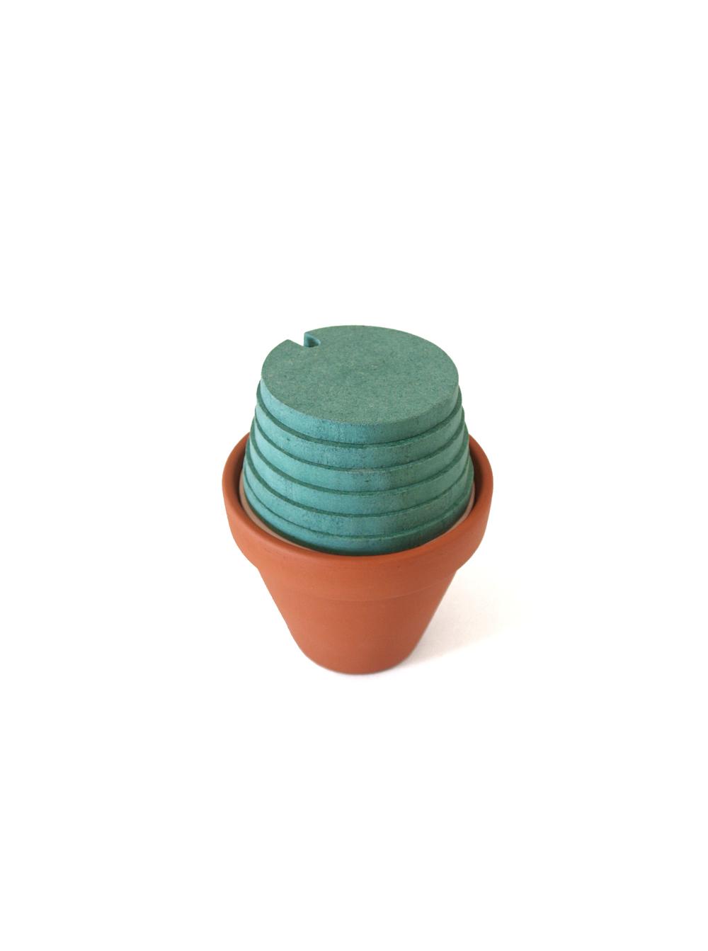 Cacti4.jpg