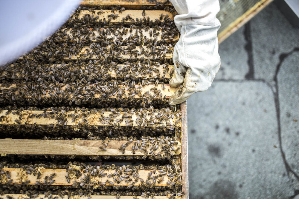 golden-girls-honey-hamburg-bienen-waben.jpg