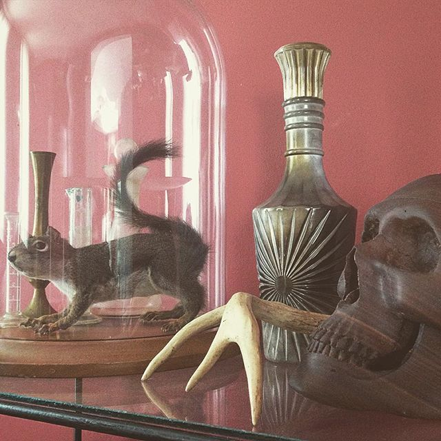 Around the house. 💀 #vintage #oddities #curiosities #skull #taxidermy #antler #homedecor