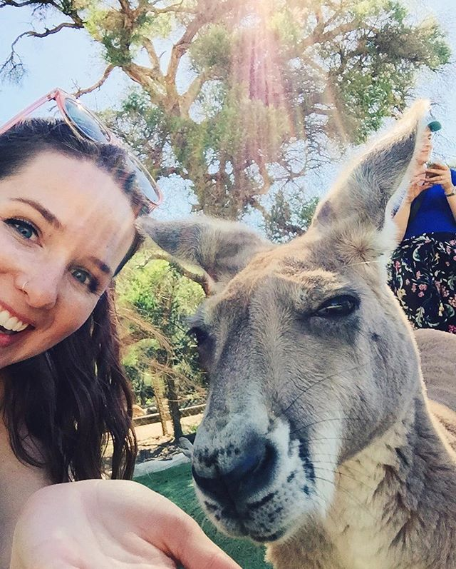 Made friends with some local #Kangaroos in #Perth