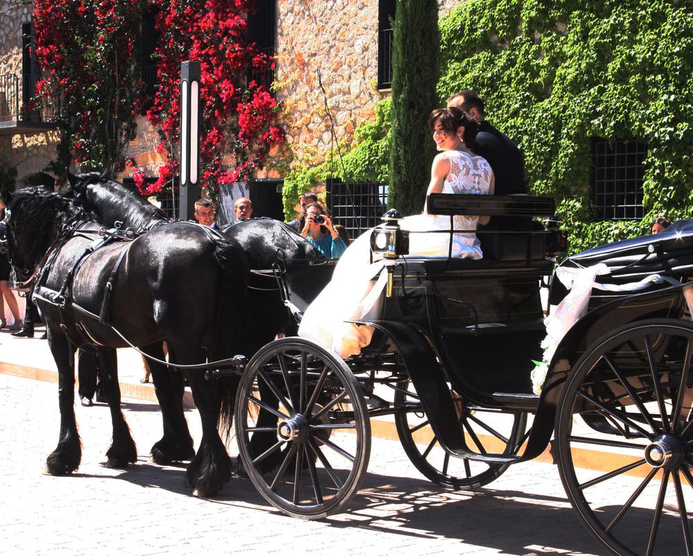 Horse carriage to come up in an elegant way.  Un carruatge de cavalls és una manera molt elegant d'arribar per part dela núvia.
