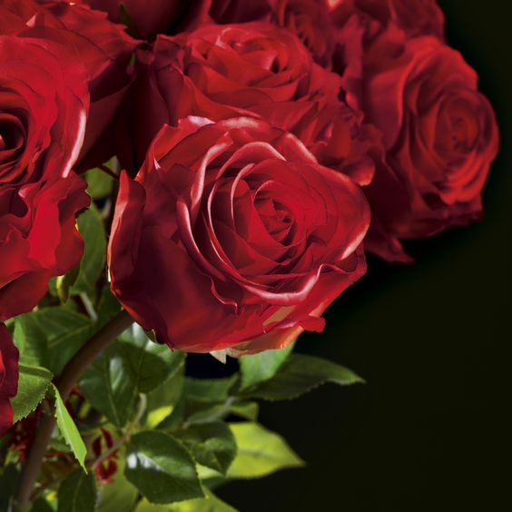 VG for Valentine's Day - Stunning Faux Florals Celebrating Love -Rose detail - Masha Shapiro Agency.jpg