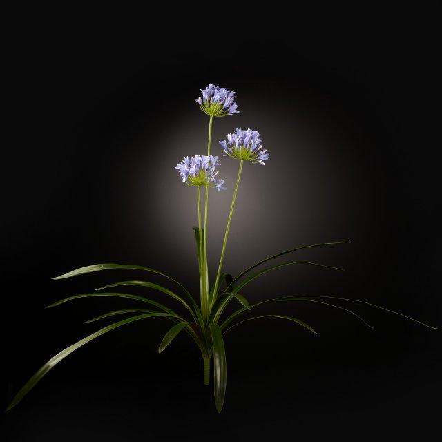 1001653.43 LILAC AGAPANTUS PLANT via Masha Shapiro Agency Instashop.jpg