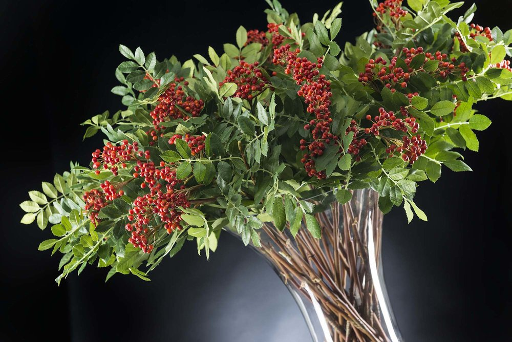 Interiors Advent Calendar - Eternity Bowl Red Berries via Masha Shapiro Agency UK.jpg