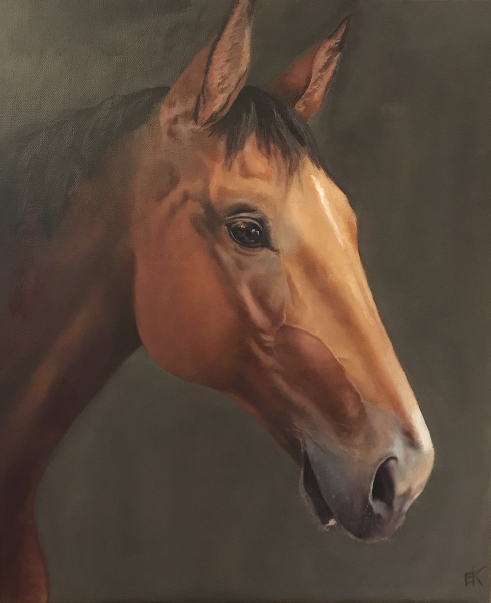 """Horse Portrait, Uchitel""  20 x 24 inch, oil on canvas."